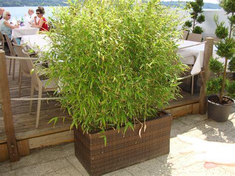 eingangsbereich verschönern balkon decor bepflanzen