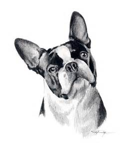 Boston Terrier Coloring Page » Home Design