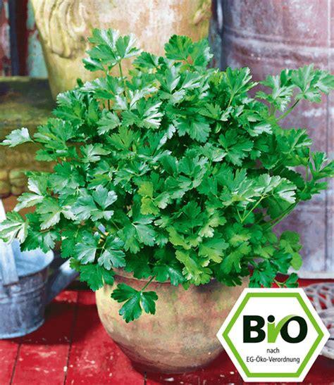 garten pflanzen bestellen bio petersilie glatt 1a pflanzen kaufen baldur