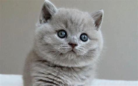 imagenes increibles de gatos imagenes de perritos y gatitos bonitos archivos gatitos