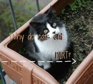 why does my eat dirt health fluffy