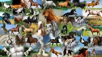 firefox horse themes horse collage horses animals background wallpapers on