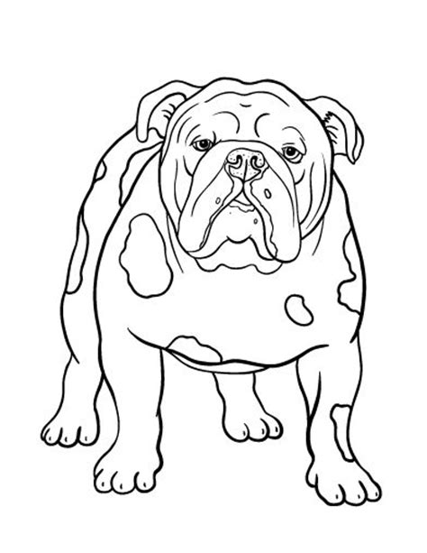 coloring pages of bulldogs 17 best images about dog patterns on pinterest