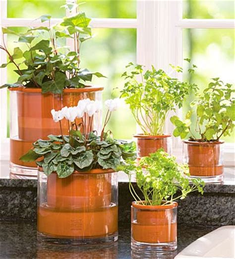 home decorative plants indoor plants for home decoration decoration ideas