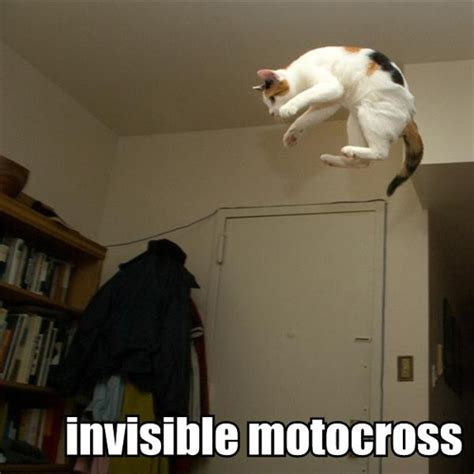 Invisible Cat Meme - cute pictures of puppies kittens baby animals 187 funny