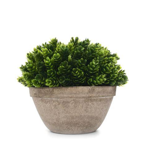 vaso con pianta pianta decorativa con vaso trea piante decorative
