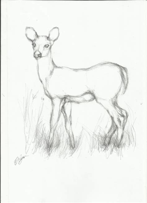 drawing animals in pencil pdf download review is it pencil drawing animals pencil art drawing