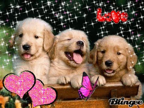 imagenes con movimiento y brillo de animales perritos tiernos con movimiento imagenes de perros tiernos