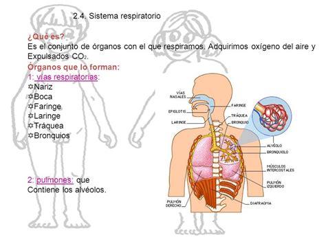 interior del cuerpo humano organos el cuerpo humano ppt descargar