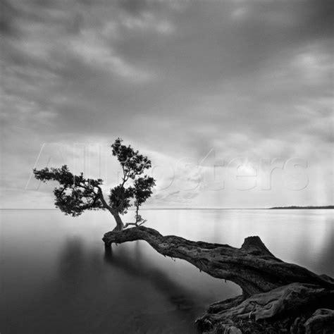imagenes artisticas a blanco y negro fotos artisticas de paisajes en blanco y negro buscar
