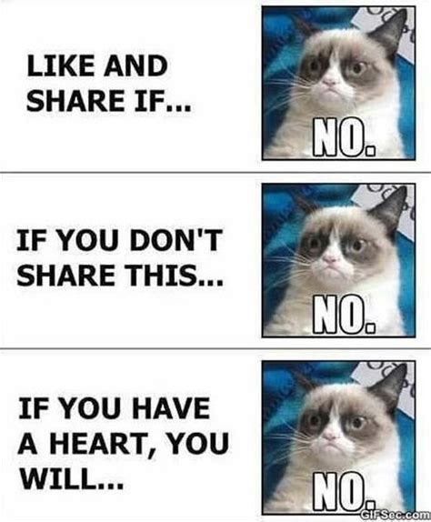 Funny No Meme - grumpy cat vs facebook meme 2015 meme collection