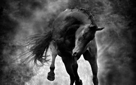imagenes en blanco y negro de caballos foto en blanco y negro de un caballo andaluz