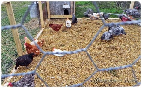 chicken in the backyard backyard chicken coop and pen photos wordlesswednesday