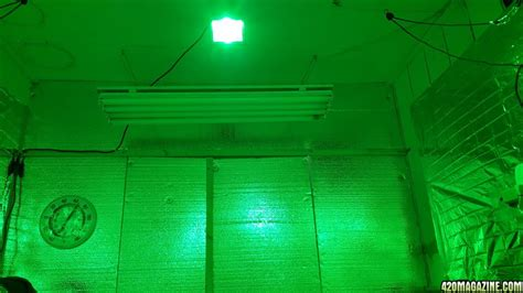 Green Light Grow Room by Mars Hydro Led Grow Light Discussion Page 1266
