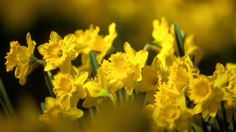 fiori gialli pin hd fiori gialli cielo belli backgrounds sfondi per il