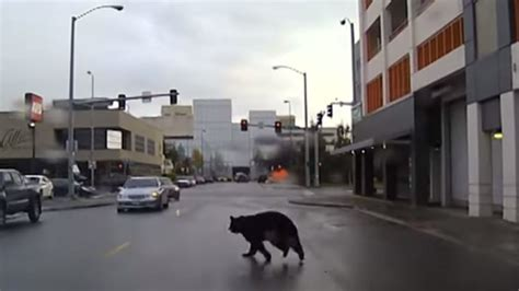 Arrest Records Anchorage Ak Leads On Through The Streets Of Anchorage Alaska The Two Way