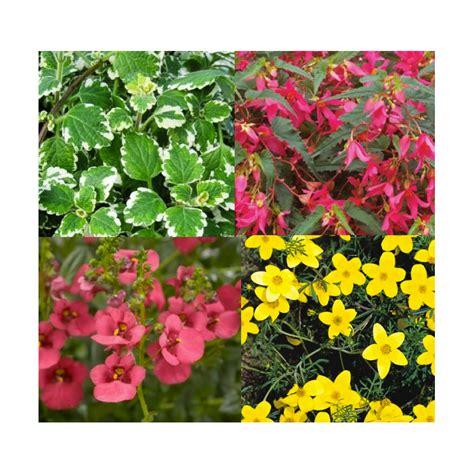Ordinaire plantes retombantes pour jardiniere #1: jardiniere-plantes-retombantes-avec-diascia.jpg