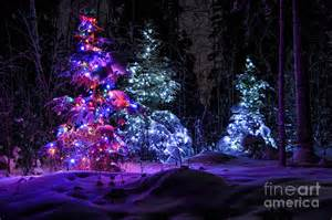 christmas tree dark winter forest photograph by gary whitton