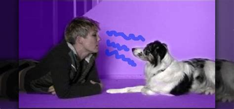 how to communicate with dogs how to communicate with a in their own language 171 dogs wonderhowto