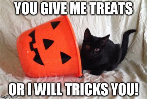 Halloween Cat Meme - halloween imgflip