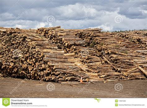 Paper From Wood Pulp - pulp and paper wood stock photo image of lumber