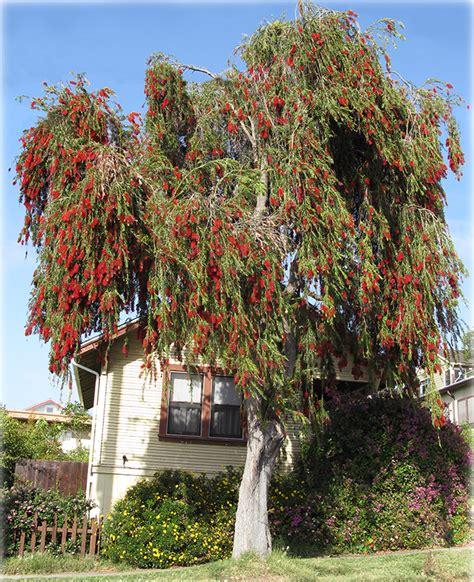 Quail Botanical Gardens by Quail Botanical Gardens Encinitas Flowers Gallery