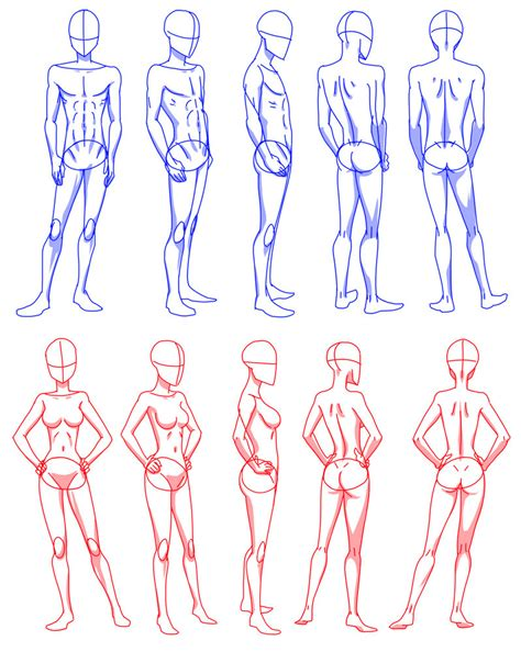 how to draw bodies shapes human outline models