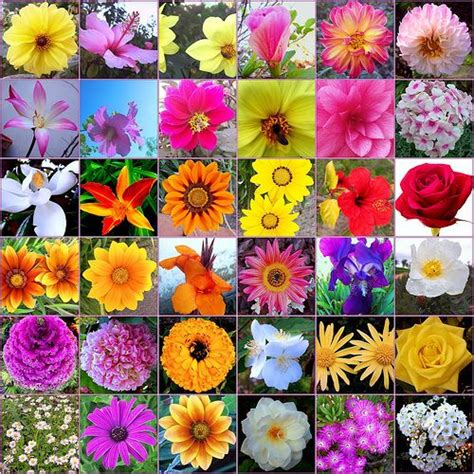 imagenes todo flores un elaborado placebo llamado flores de bach la ciencia y