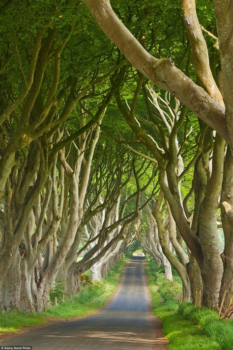 top  fascinating tree tunnels   world top