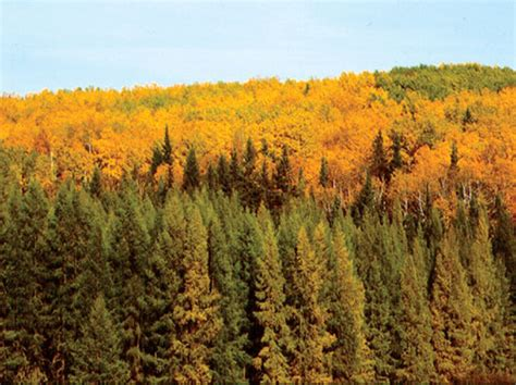 The Interior Plains Vegetation by Interior Plains Regions Of Canada