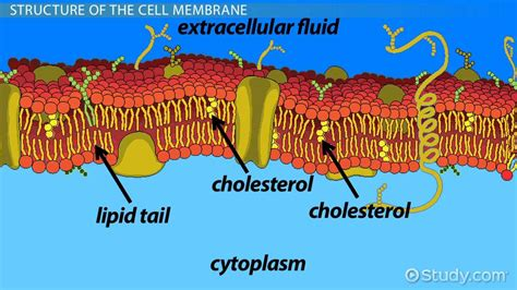 cell membrane maintain homeostasis video