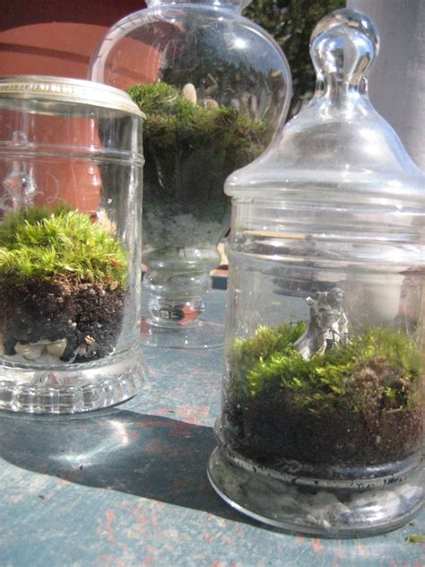 moss in jars eat grow live