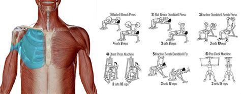 pettorali interni esercizi pettorali molli l importanza dell assetto scapolare