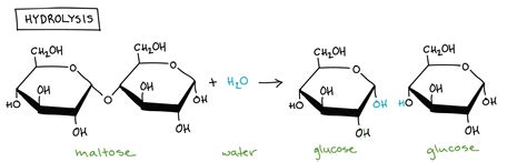 related keywords suggestions for hydrolysis