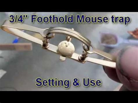 proper use of 3 4 quot foothold mouse trap
