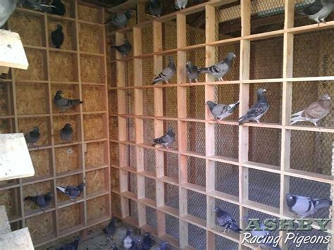 building new pigeon loft 12 pigeon loft plans