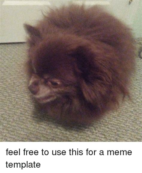 Memes Free To Use - funny meme templates memes of 2017 on sizzle slew