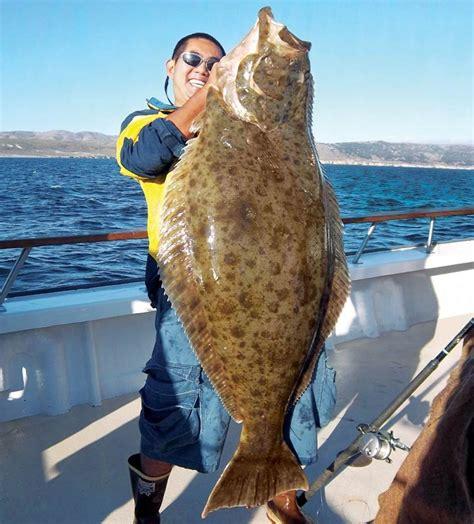 halibut moderate mercury fish seafood pinterest