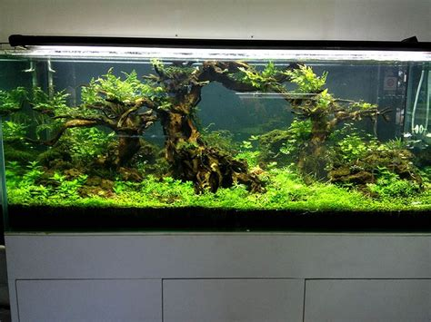 aquascape store 17 best images about fish tank on pinterest aquarium