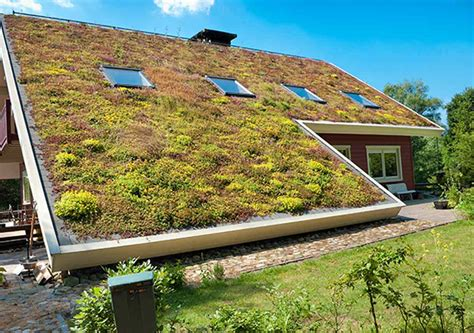 eco roofs secrets to a flourishing eco roof best reports