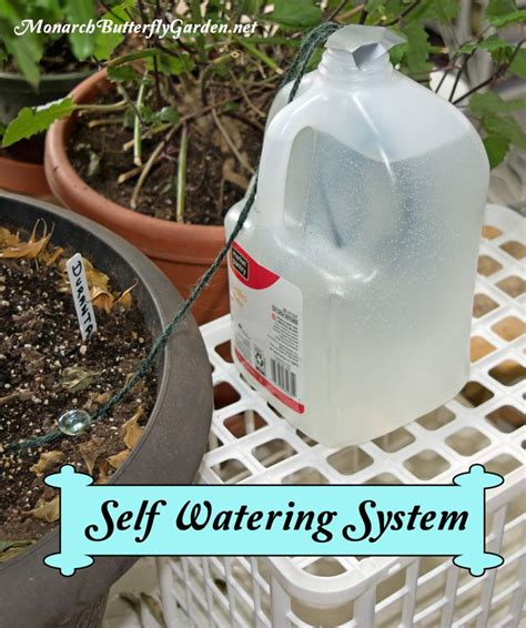 self watering plants 25 best ideas about self watering pots on pinterest