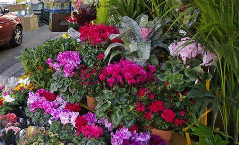 mercato co di fiori mostre di piante e fiori da non perdere tra maggio e
