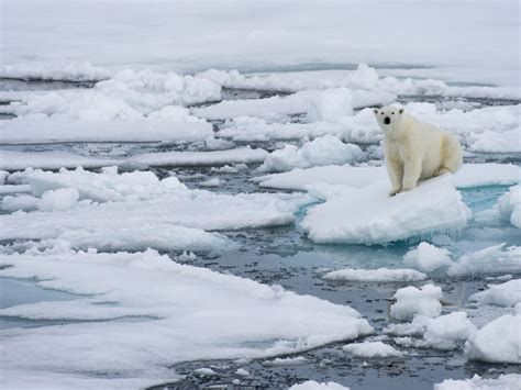 arctic sea arctic warming why record breaking melting is just the