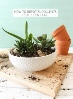 How To Propagate Succulents From Cuttings And Offsets - propagate a kalanchoe by stem cuttings plant division