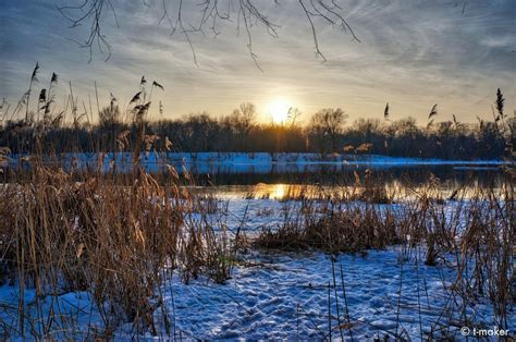 reed by the water s edge by t maker on deviantart