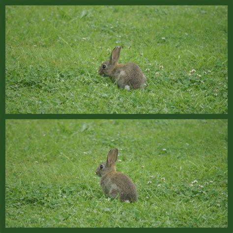 un lapin s est sauv 233 dans le jardin aux petits