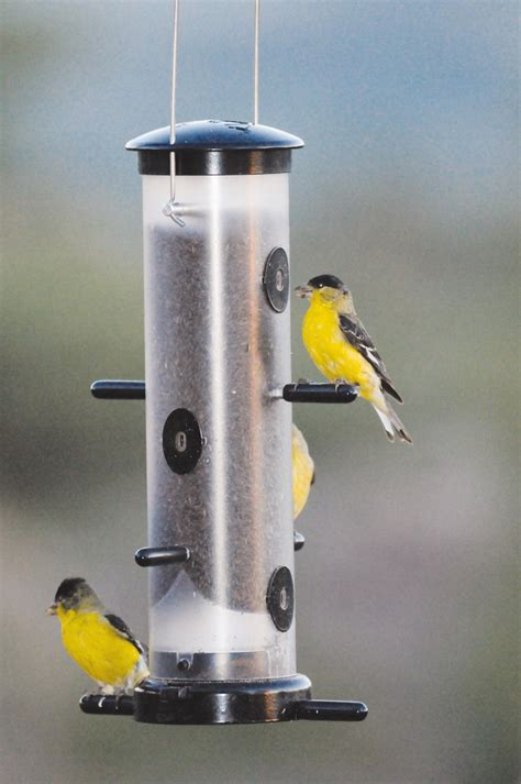 1000 ideas about wild birds unlimited on pinterest