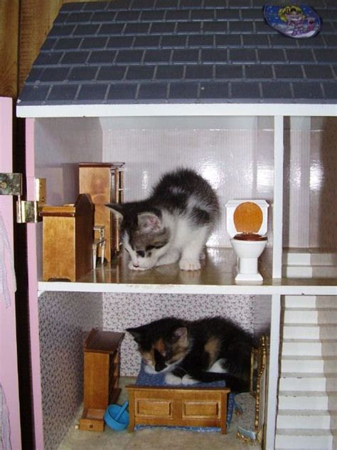 cat doll house 139 best images about cats in dollhouses on pinterest tabby cats cats and cardboard