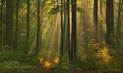 the light in the forest audiobook in this of green and gold found this on r earthporn