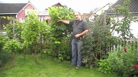 garten anpflanzen tomaten im garten anpflanzen die neueste innovation der